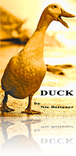 Duck Novella Cover
